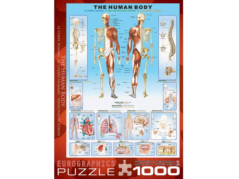 the skeletal 1000 pc jigsaw puzzle - puzzle palace, Skeleton
