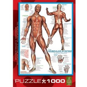 The Muscular System 1000 PC Jigsaw Puzzle