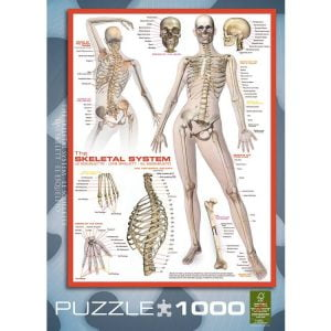 The Skeletal System 1000 PC Jigsaw Puzzle