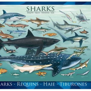Sharks 1000 PC Jigsaw Puzzle