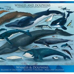 Whales and Dolphins 1000 PC Jigsaw Puzzle