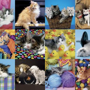 Kitten Collage 300 XXL Jigsaw Puzzle