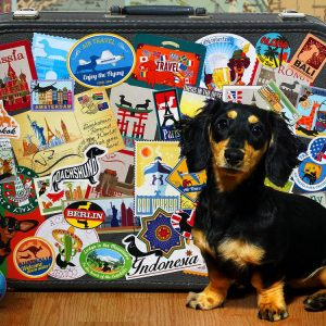 Dachshund Round The World 500 PC Jigsaw Puzzle