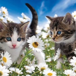 Kitties and Daisies 100 XXL PC Jigsaw Puzzle