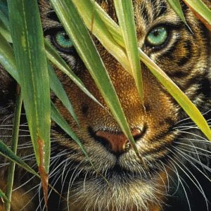 Mysterious Tiger 1000 PC Jigsaw Puzzle