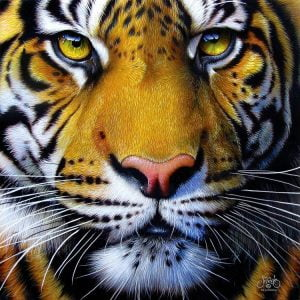 Golden Tiger Face 1000 PC Jigsaw Puzzle