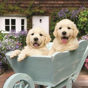 Puppies in a Wheelbarrow 260 PC Jigsaw Puzzle