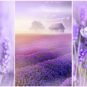 romantic-lavender-fields-1000-pc-jigsaw-puzzle