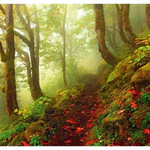 magic-forests-path-1000-pc-jigsaw-puzzle