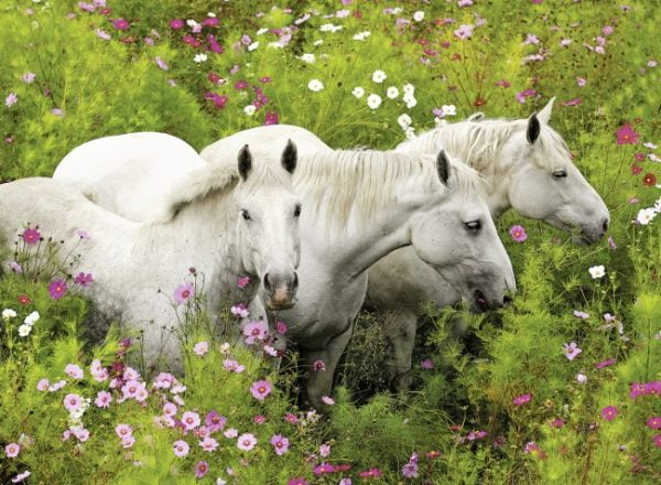 Horses in the Field 300 PC Jigsaw Puzzle