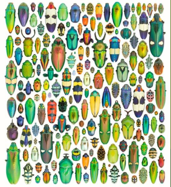 Exquisite Creatures Insect Art 1000 PC Jigsaw Puzzle