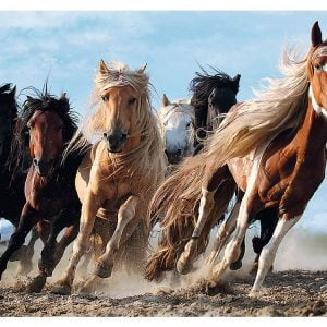 Galloping Horses 1000 Piece Trefl Jigsaw Puzzle