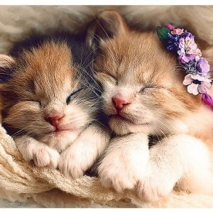 Sleeping Kittens 500 PC Trefl Jigsaw Puzzle