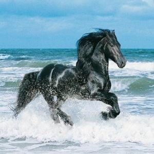 Black Horse 500 Piece Clementoni Puzzle