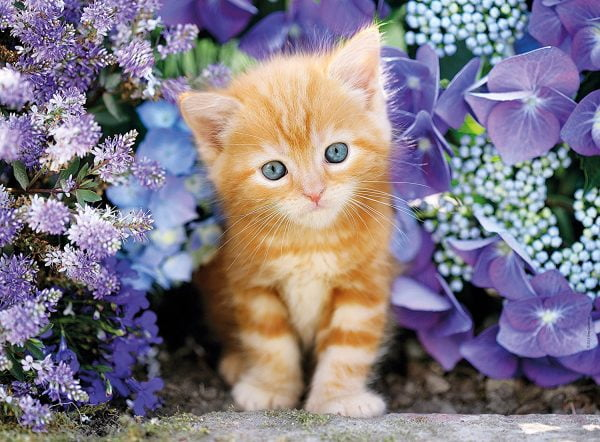 Ginger Cat in Flowers 500 Piece Clementoni Puzzle