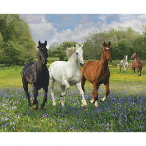 Horses 1000 Piece Clementoni Puzzle