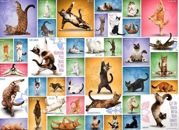 Yoga Cats 1000 Piece Eurographics Jigsaw Puzzle