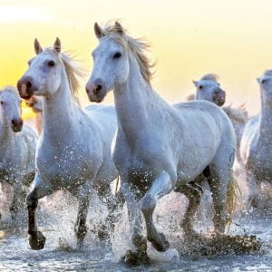 White Horses at Sunset 1000 Piece Educa Jigsaw Puzzle