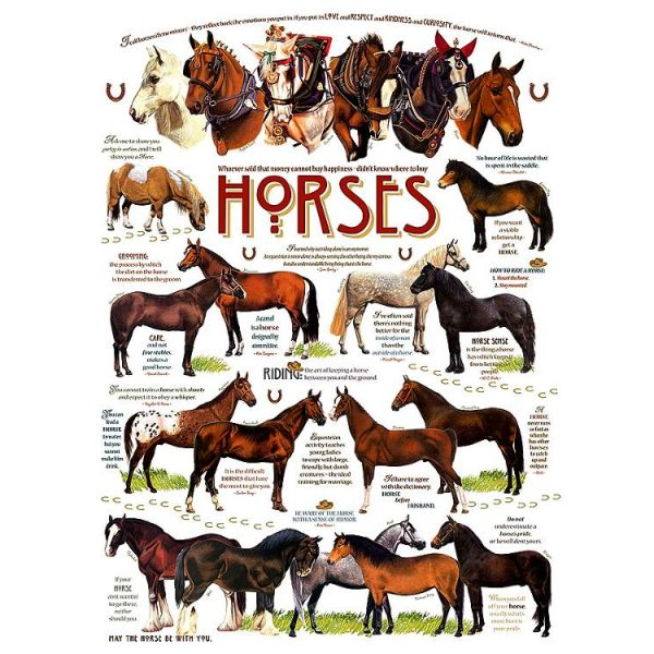 Horse Quotes 1000 Piece Puzzle – Cobble Hill