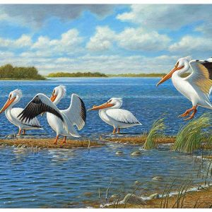 Pelicans 1000 Piece Jigsaw Puzzle by Cobble Hill
