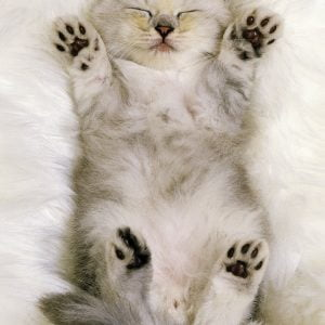 Cuddly Kitten 300 Piece Puzzle - Ravensburger