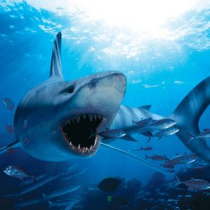 Hungry Shark 1000 Piece Jigsaw Puzzle - Eurographics