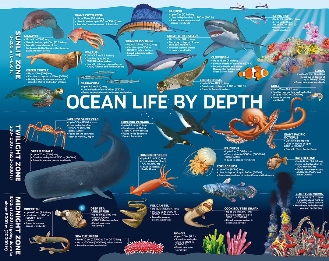 Ocean Life 500 Large Puzzle Piece Puzzlebilities Jigsaw