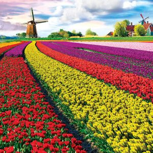 Tulip Fields - Netherlands 1000 Piece Jigsaw Puzzle