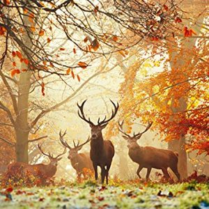 Magic Forests - Stags 1000 Piece Heye Jigsaw Puzzle