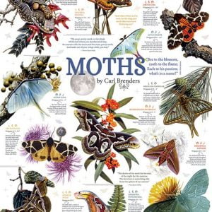 Moth Collection 1000 Piece Puzzle - Cobble Hill