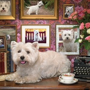 Westies are my Type 1000 Piece Jigsaw Puzzle - Cobble Hill