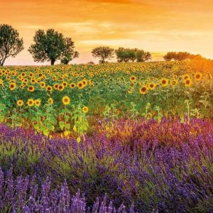Fields of Sunflowers and Lavender 1500 Piece Jigsaw Puzzle