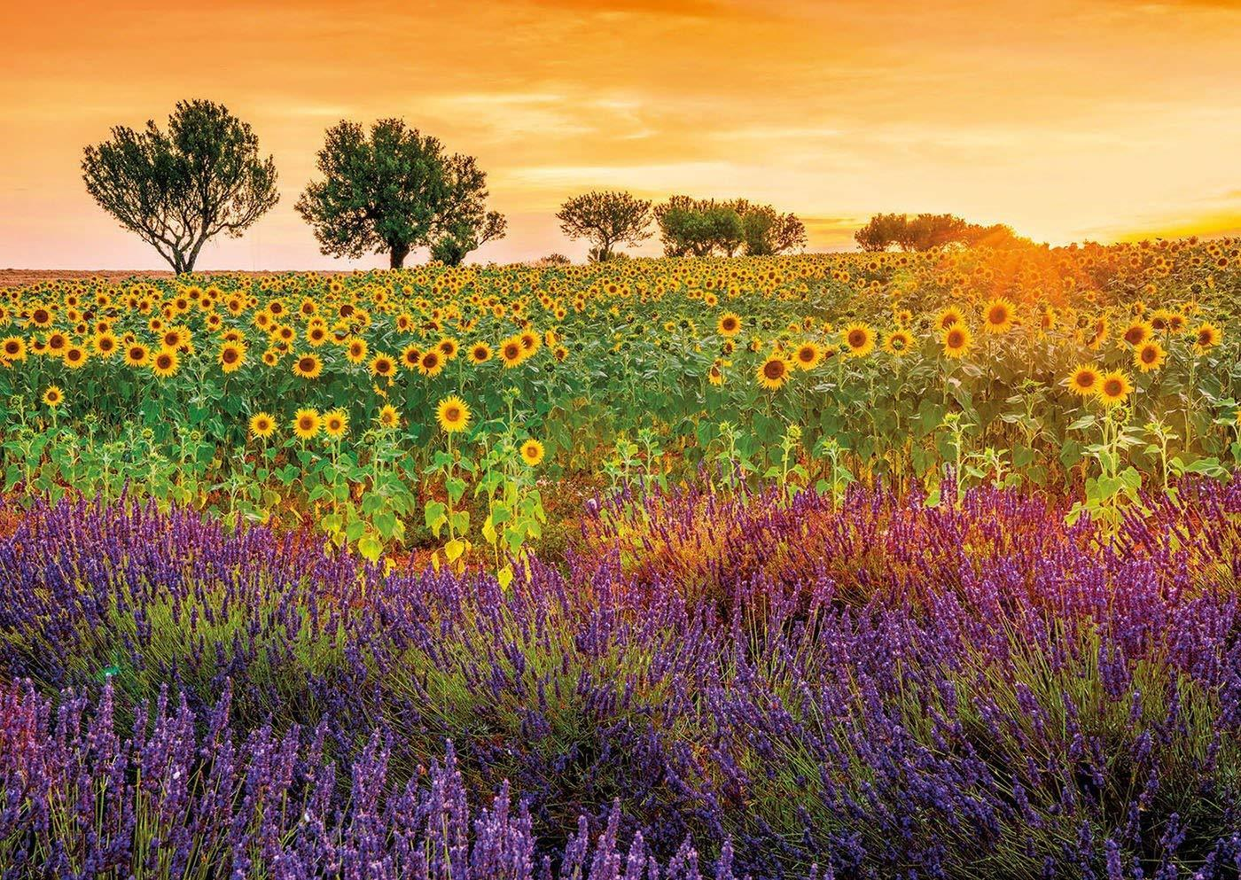 Cars For Sale Sydney >> FIELD OF SUNFLOWERS 1500 PIECE JIGSAW PUZZLE ** PUZZLE PALACE AUSTALIA