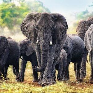 African Elephants 1000 Piece Trefl Jigsaw Puzze