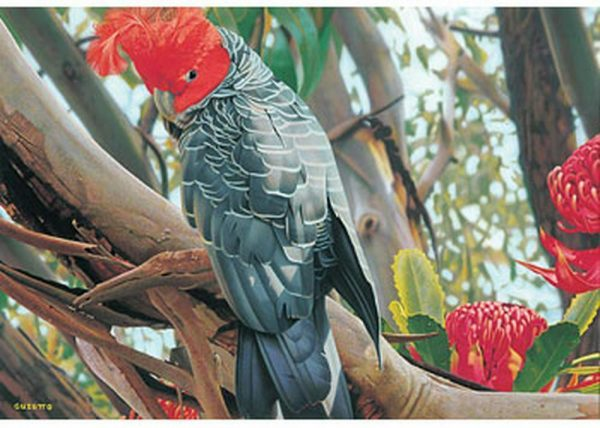 Australian Geographic - Gang Gang Cockatoo Blue Opal 1000 piece Puzzle
