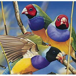 Australian Geographic - Gouldian Finches 1000 Piece Jigsaw Puzzle