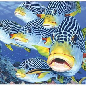 Australian Geographic - Oblique-Banded Sweetlips 1000 Piece Puzzle