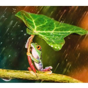 Green Umbrella 500 Piece Trefl Jigsaw Puzzles