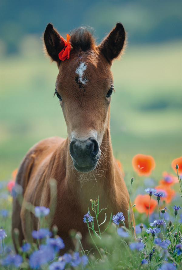 My Beloved Foal 150 Piece Jigsaw Puzzle