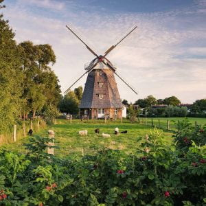 Windmill on the Baltic Sea 1500 Piece Jigsaw Puzzle - Ravensburger