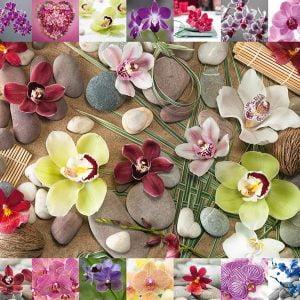 Assaf Frank - Orchids 1000 Piece Jigsaw Puzzle - Schmidt