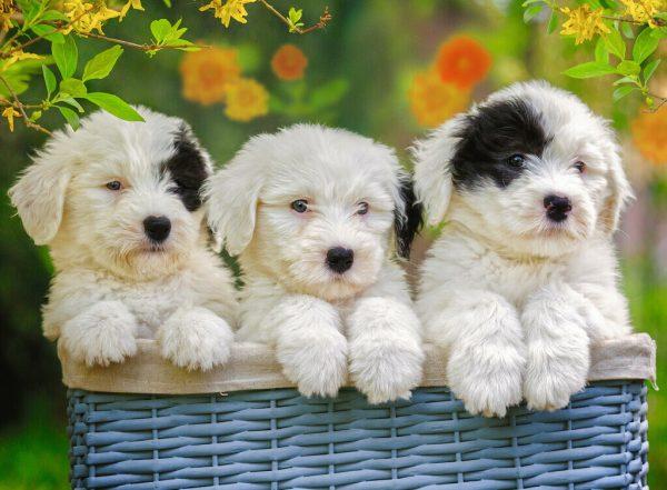 Cuddly Puppies 200 XXL Piece Jigsaw Puzzle - Ravensburger