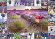 Assaf Frank - The Scent of Lavender 1000 Piece Jigsaw Puzzle - Schmidt