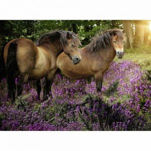 Ponies in the Flowers 500 Piece Jigsaw Puzzle - Ravensburger