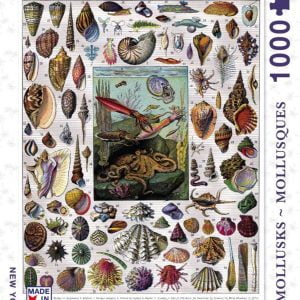 New York Puzzle Company - Mollusks - Mollusques 1000 Piece Jigsaw Puzzle