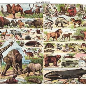 New York Puzzle Company - Mammals 1000 Piece Jigsaw Puzzle