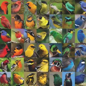 New York Puzzle Company - Rainbow of Birds 1000 Piece Jigsaw Puzzle