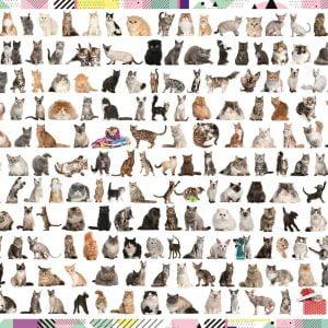 208 Cats 1000 Piece Jigsaw Puzzle - Trefl