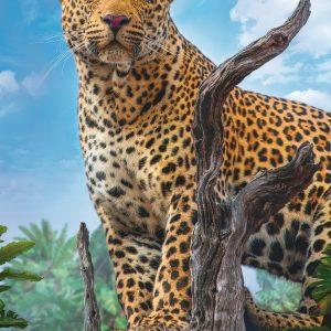 Wild Leopard 500 Piece Jigsaw Puzzle - trefl