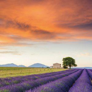 Field of Lavendar, Provence 500 Piece Jigsaw Puzzle - Schmidt